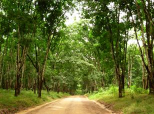 EMP of Rubber Plantations and Processing Factories